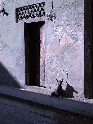 Dogs of Havanna II