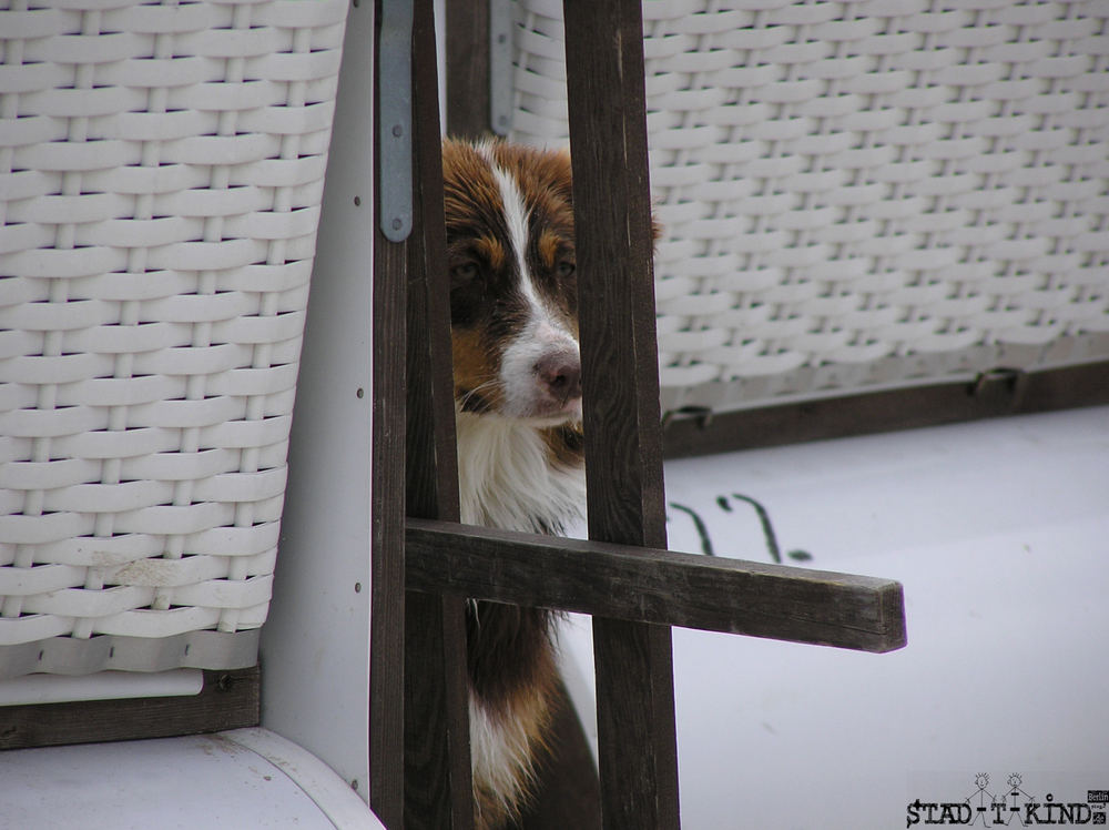 dogs_locking