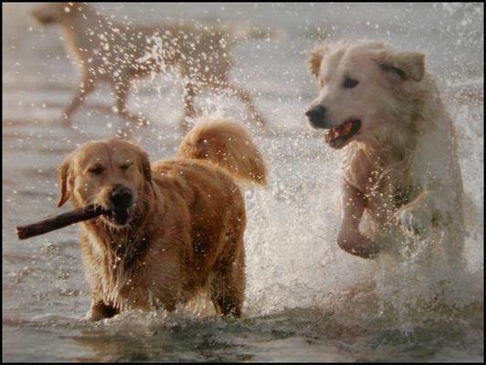 Dogwash