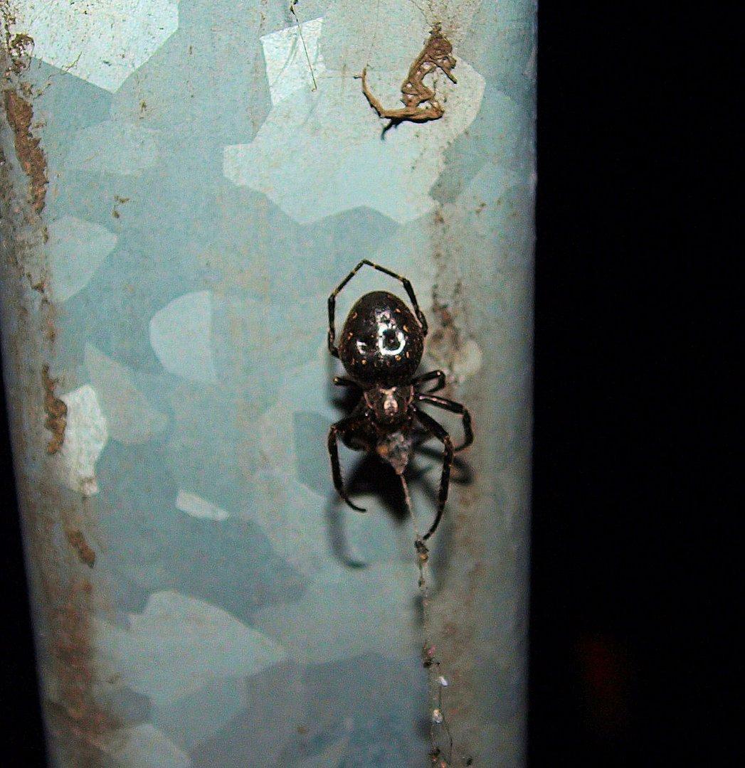 Doku Foto hatte nur die kleine Panasonic dabei und es war dunkel ... was ist das für eine Spinne