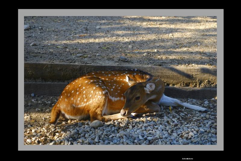 Dolce bambi.......