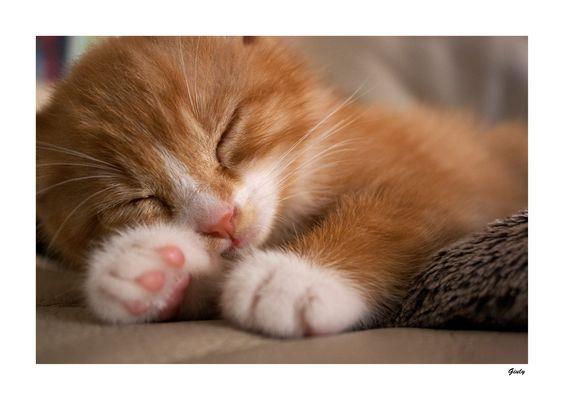 dolce dormire