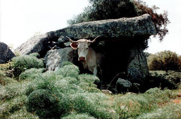 Dolmen als Kuhunterstand
