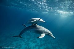 Dolphin & Baby