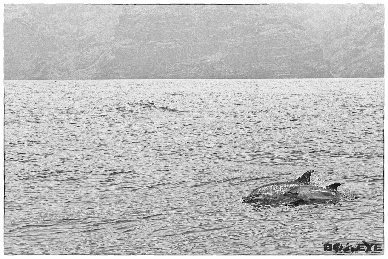 Dolphins @ Teneriffe