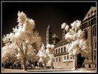 Dom zu Speyer (Infrarot) I