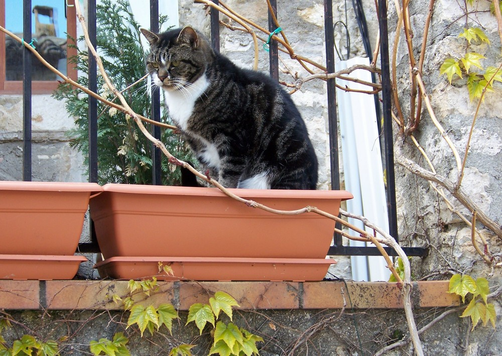 Dominer (Le village des chats III)