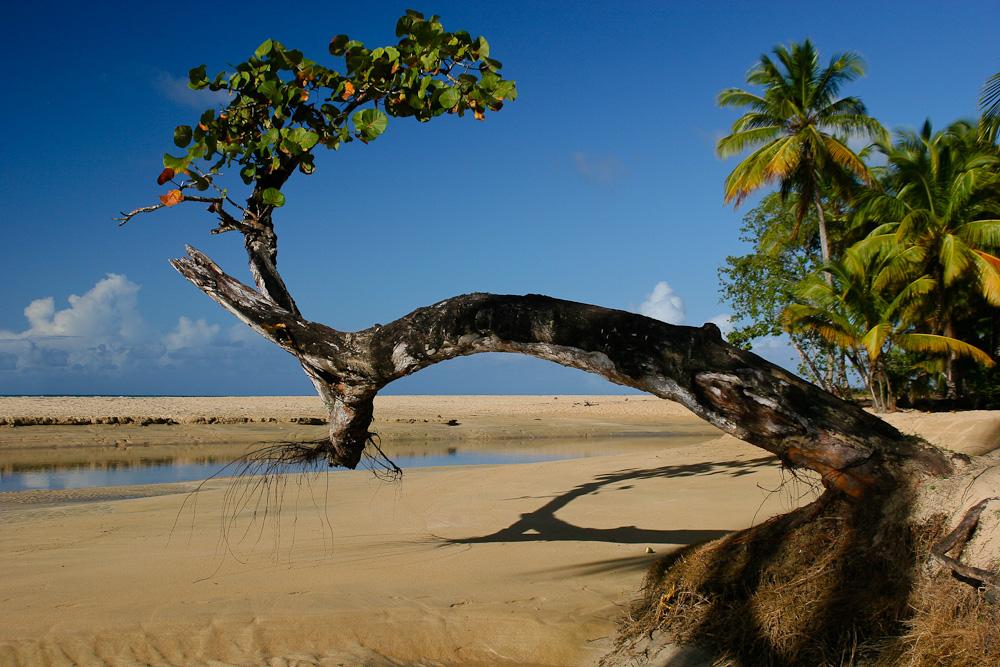 Dominikanische Republik - Halbinsel Samana (11)