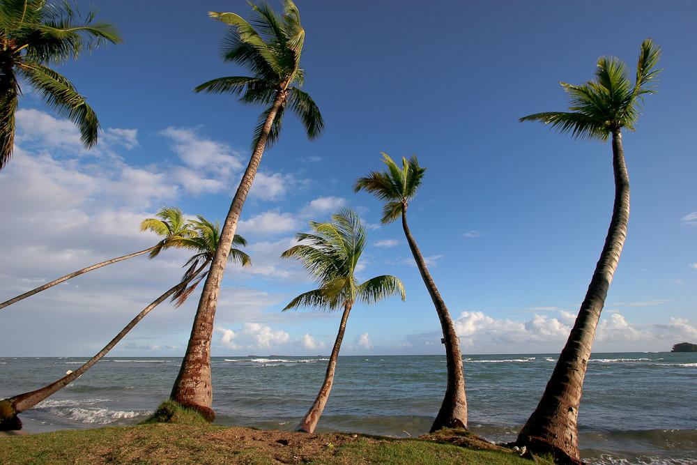 Dominikanische Republik - Halbinsel Samana (22)