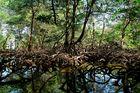 Dominikanische Republik - Nationalpark Los Haitises