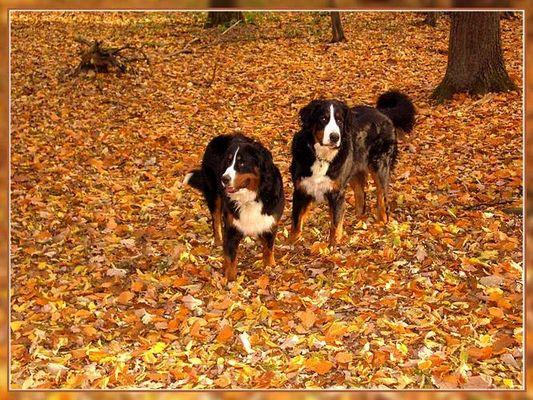 Domino und Ginja im Herbstlaub