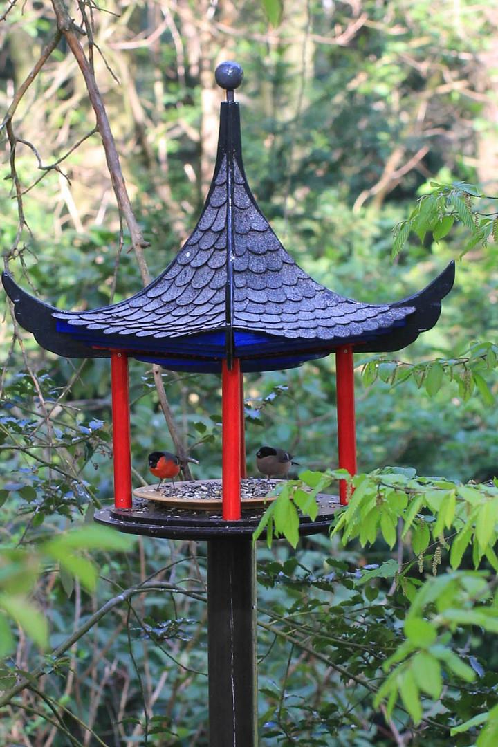 Dompfaffpaar im Chinapavillon