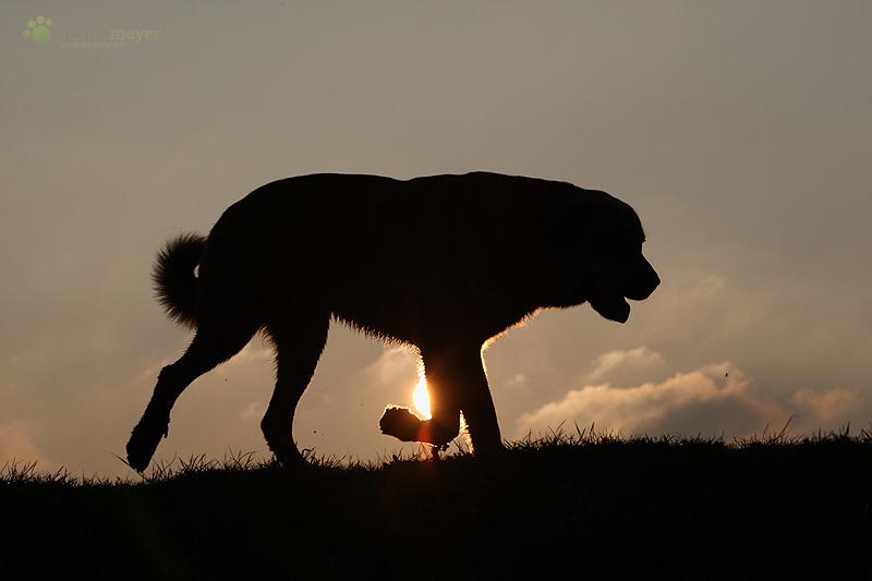 Don und die Abendsonne