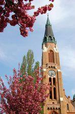Donaufelderkirche mit blühendem Japanischen Nelkenkirschenbäumchen.
