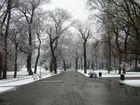 Donaupark im ersten Schnee...