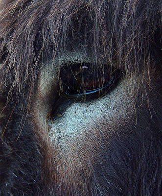Donkey's Eye