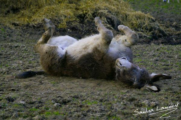 Donkey's happy life !