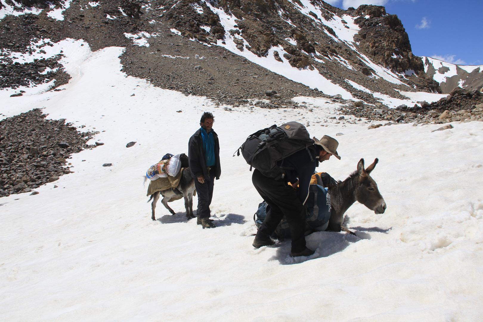 Donkeys of Pamir V