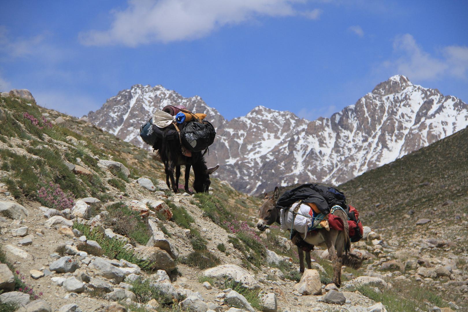 Donkeys of the Pamir IV