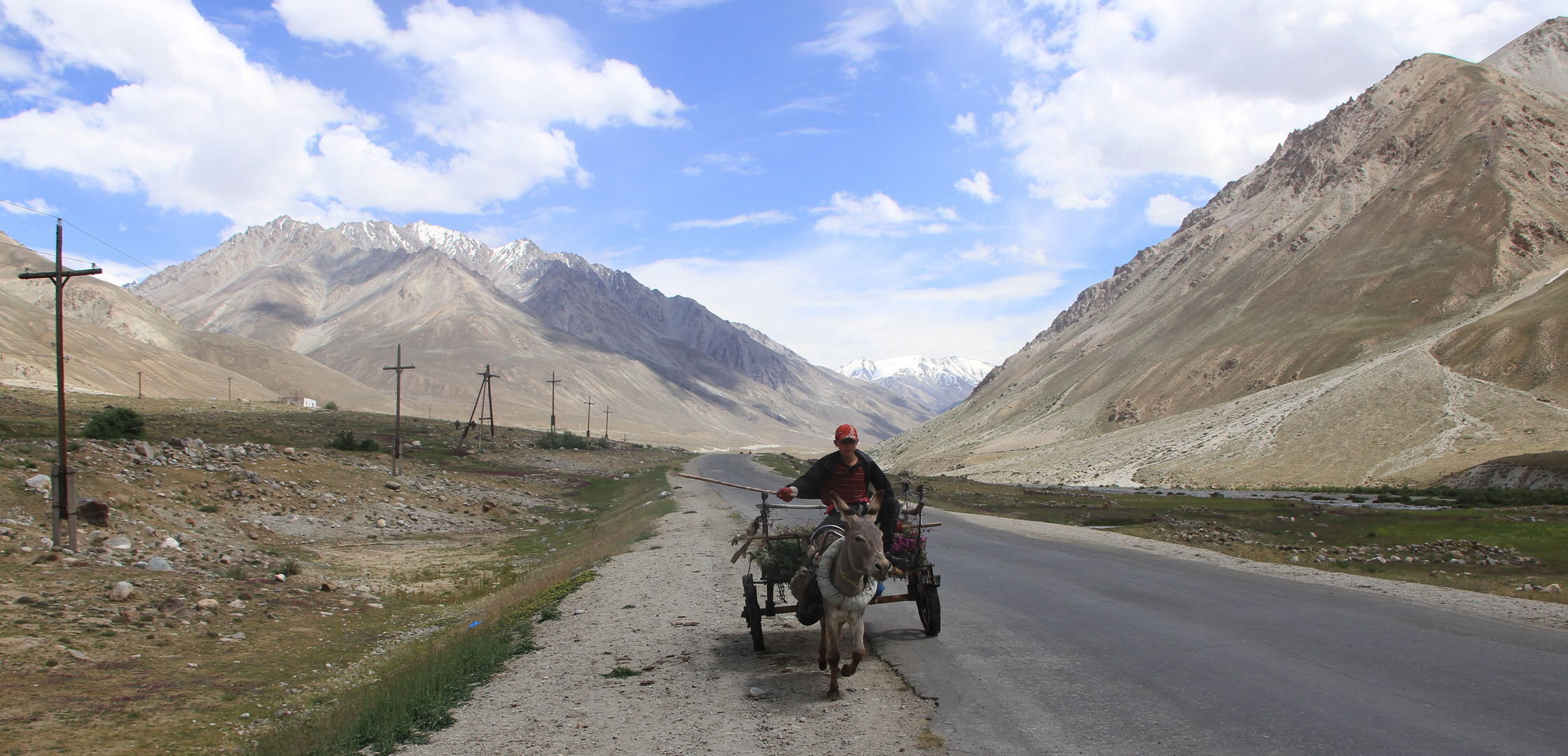 Donkeys of the Pamir VIII