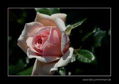 Donnerstag-Blume