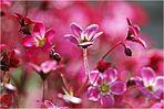 Donnerstagsblümchen