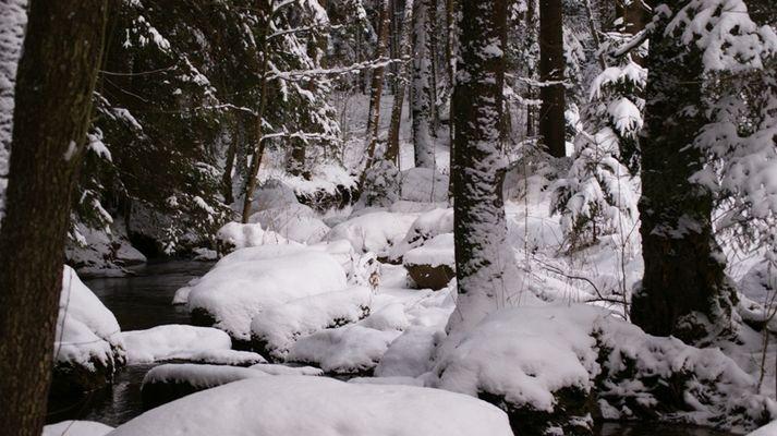 Doost im Winter (13.02.2009) 06