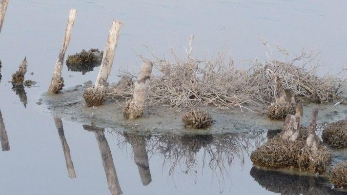 Doouceur d'étang