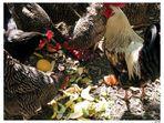 doping der leistungsportler / lasst unsere hühner rennen