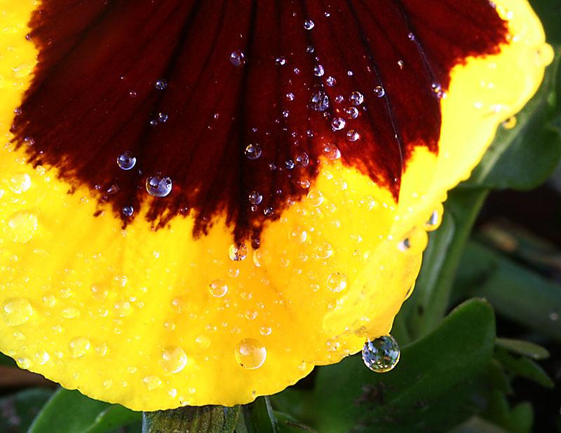 dopo la pioggia (3)