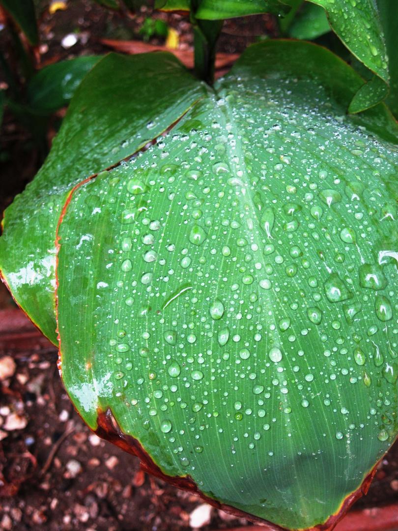 Dopo la pioggia, cristalli.
