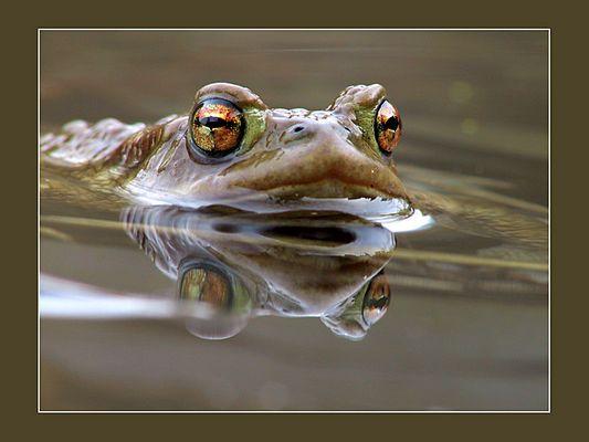 Doppelfrosch :-)