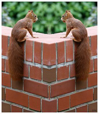 Doppelhörnchen