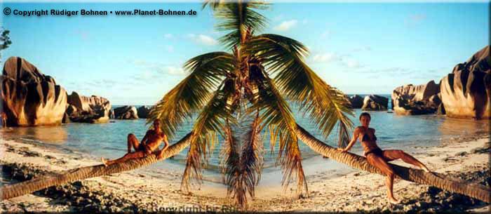 Doppelpalme auf den Seychellen :-)