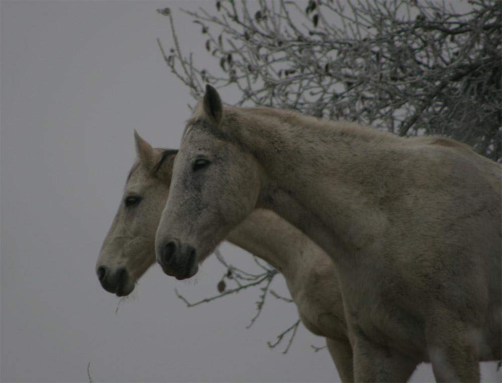 Doppelpferd