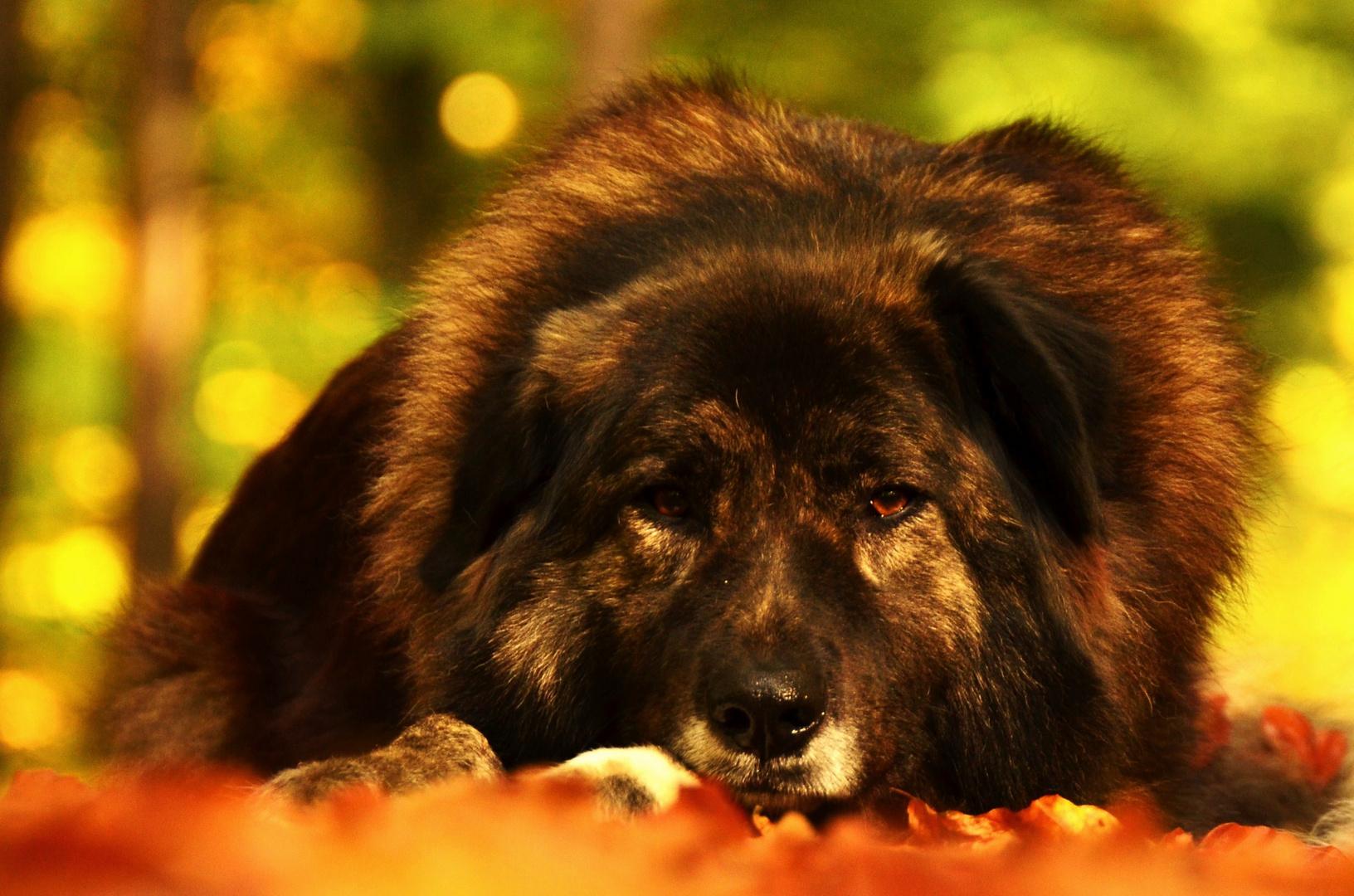 Dora im Herbstwald