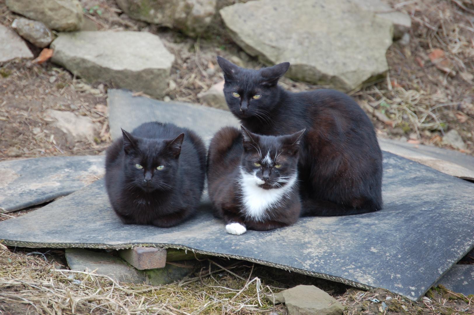 Dorfkatzen beim Chillen