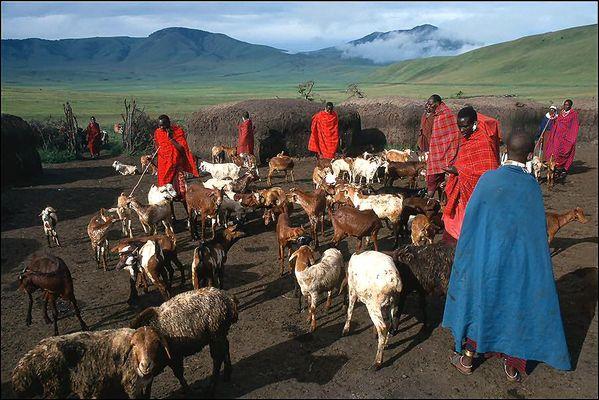 Dorfleben der Massai