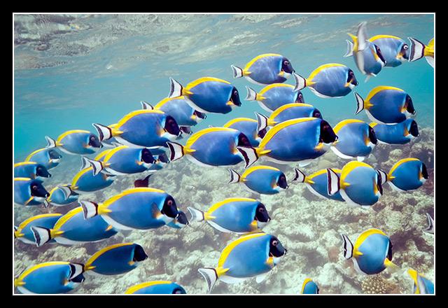 Dories, Malediven