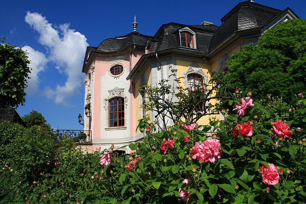 Dornburger Schlösser - Das Rokoko-Schloss in voller Blüte - Dornburg (Saale)
