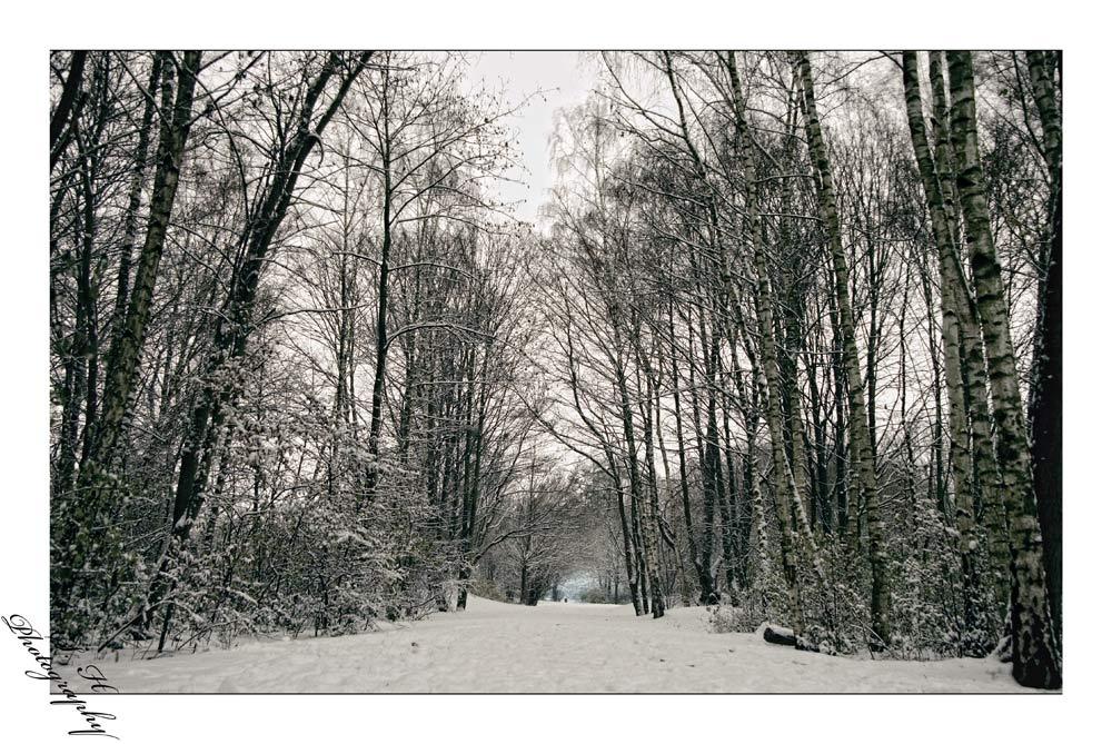 dorneburgerpark im schneekleid