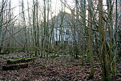 Dornröscheninsel2