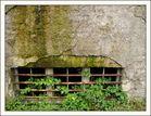 Dornröschens Kellerfenster?