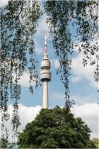 Dortmund's Florian