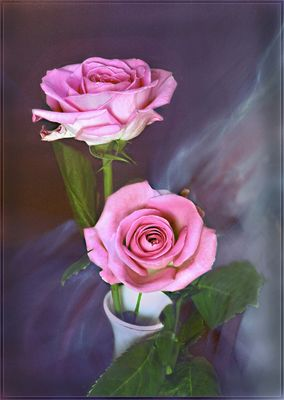 Dos hermosas Rosas