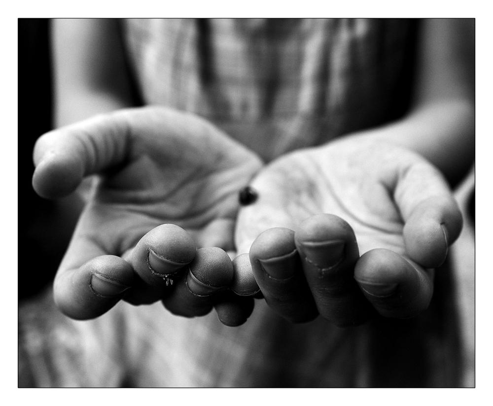 Dos manos y una mariquita
