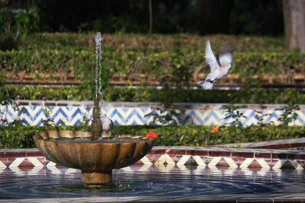 dos palomas al sol de noviembre tomando agua de la fuente de la concha