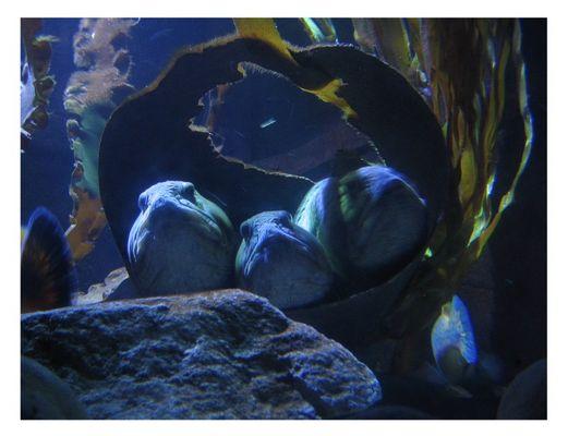 Dosenfisch