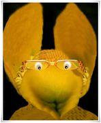 Dotterblumen Hase mit Durchblick