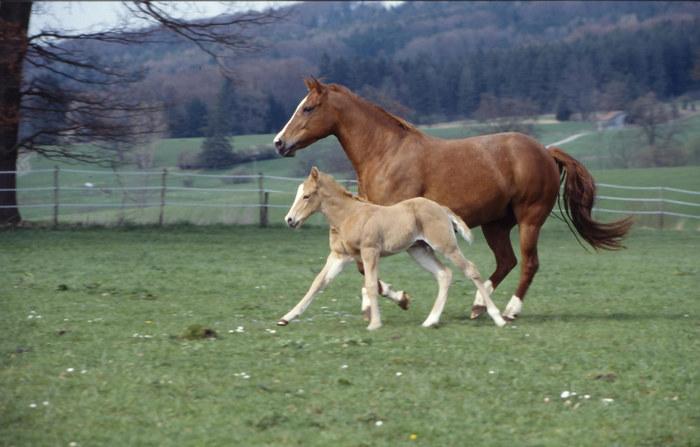 Dottie und Sohn